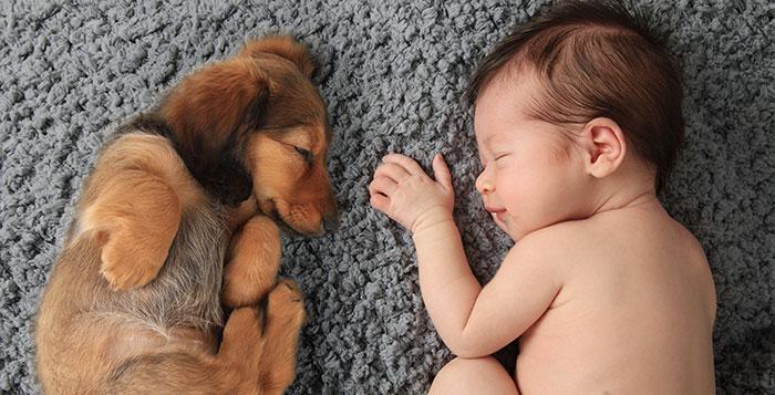 Newborn Baby Girl Sleeping Next To A Dachshund Puppy