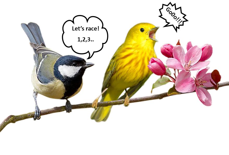Let's Race!!!