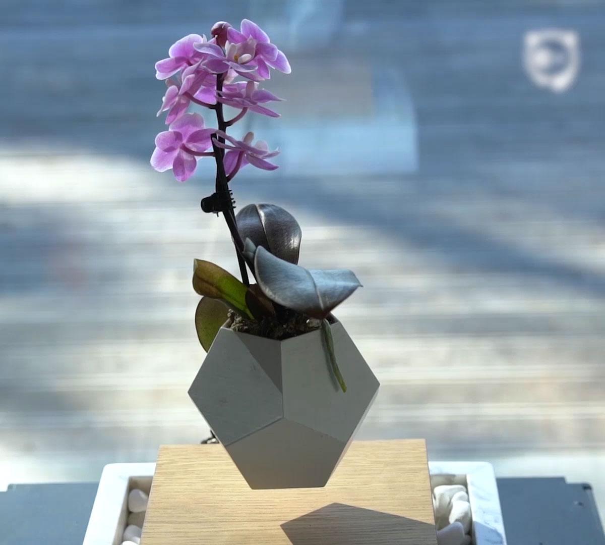 Levitating Flower Pot | Bored Panda