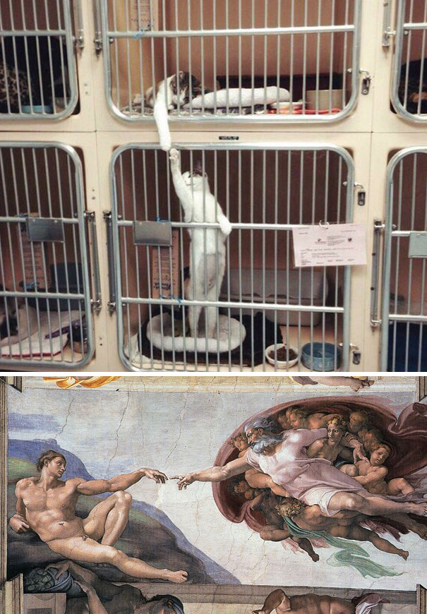 The Creation Of Catam