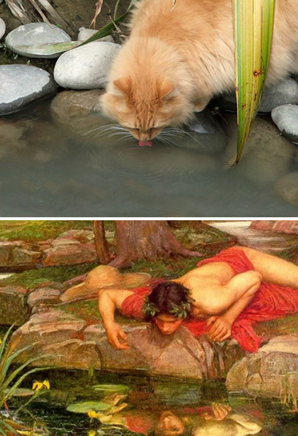"This Cat And John William Waterhouse's ""Echo And Narcissus"""