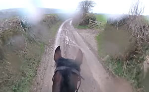 Man Takes Retired Racehorse For A Gentle Countryside Trot, Instantly Regrets It