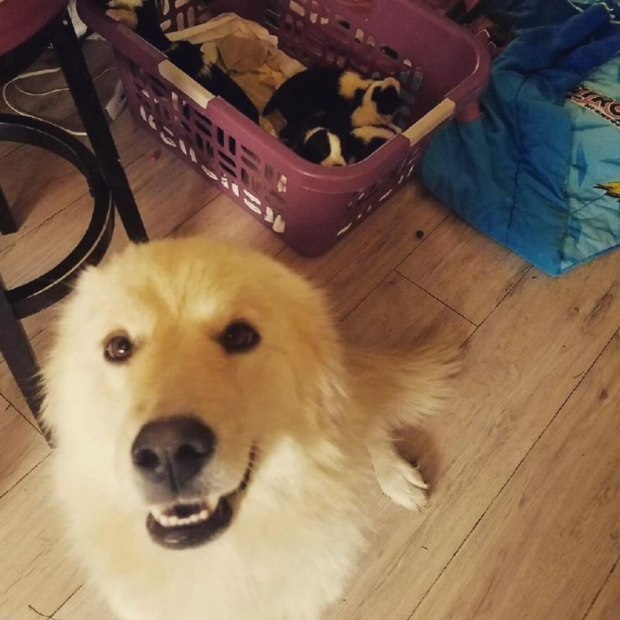 Dog Who Lost Her Puppies In A Fire Can't Hold Her Excitement After Adopting These Orphaned Puppies