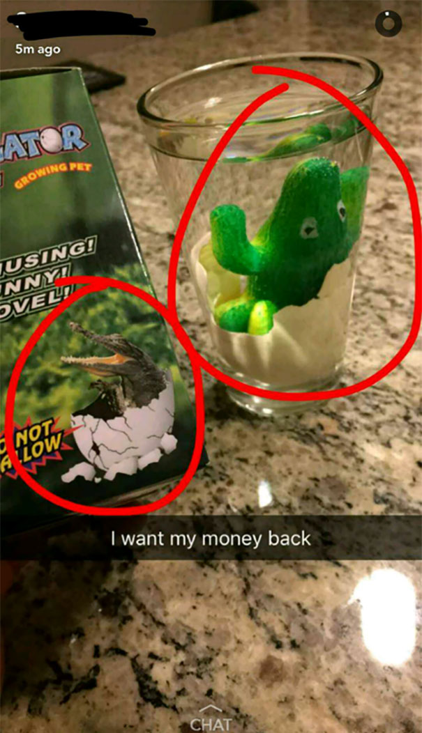 Growing An Alligator