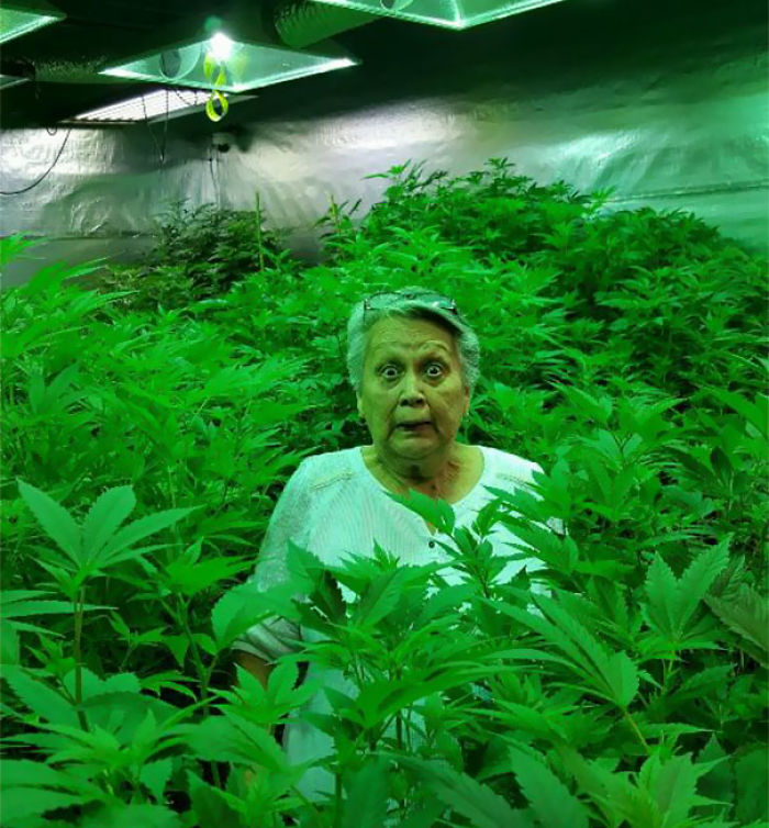 Friends Grandma Went To A Grow House For The First Time