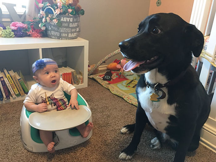 My Niece Meeting A Dog For The First Time
