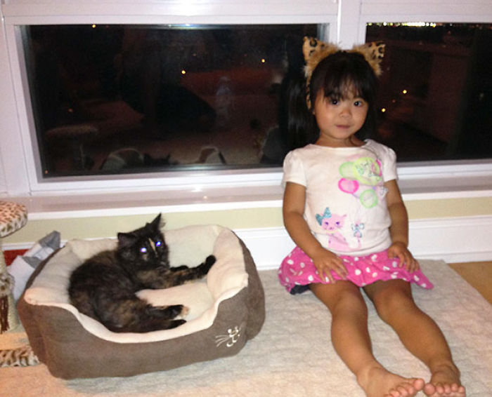 My Kitten And Niece's First Time Meeting. She Insisted On Wearing Cat Ears And A Cat Shirt To Help Break The Ice