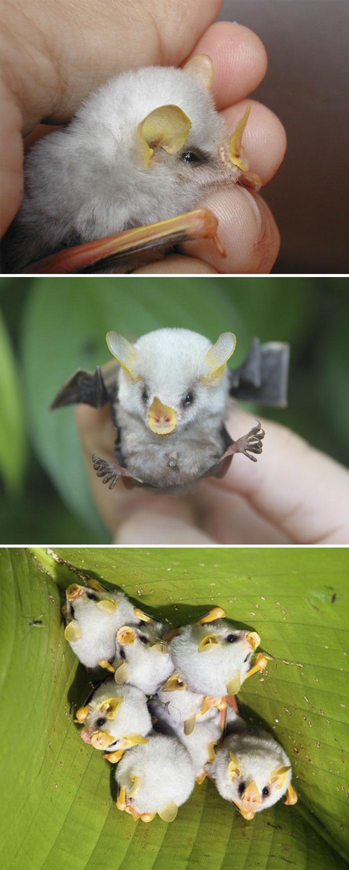 太难得了!这些珍稀动物幼崽你可能从来没见过! 天了噜!小组 果壳网 科技有意思