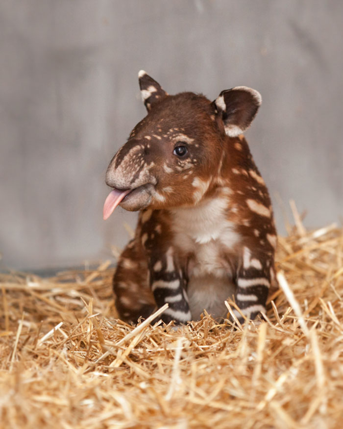 10 rare animal babies you ve probably never seen before bored panda
