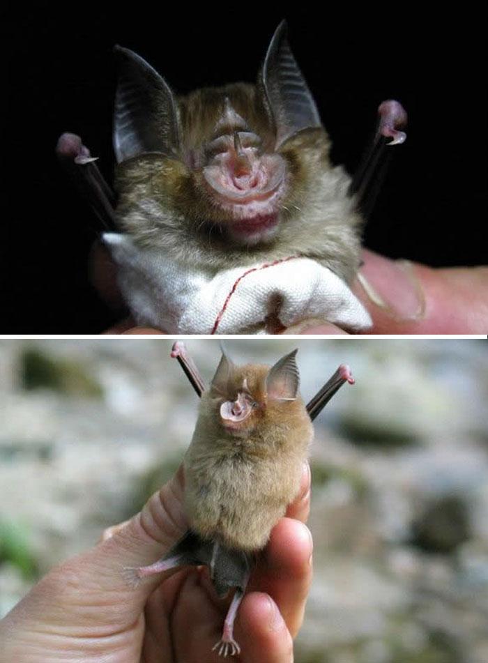 Baby African Bat