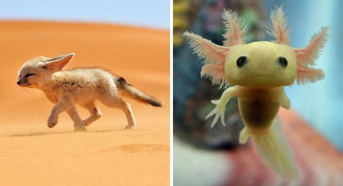 10+ Crías de animales curiosos que seguramente no habías visto antes