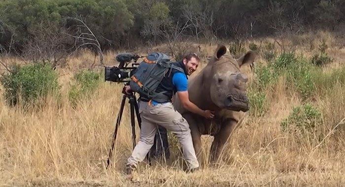 rhino-cameraman-belly-rub-south-africa-01