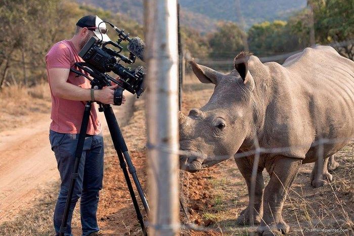 rhino-cameraman-belly-rub-south-africa-2