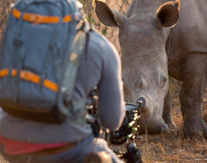 rhino-cameraman-belly-rub-south-africa-5