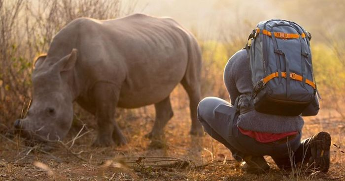 This Wild Rhino Walked Up To A Cameraman And Demanded A Belly Rub