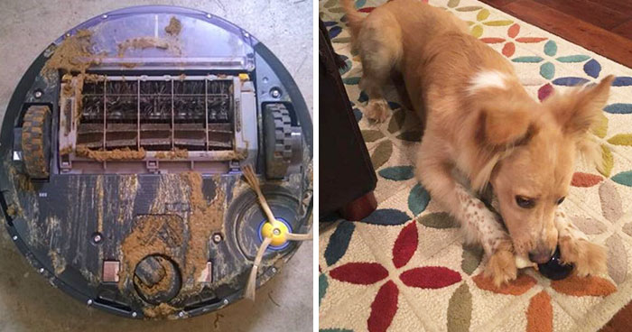 What Happens When Roomba Runs Over Dog Poo In The Middle Of The Night