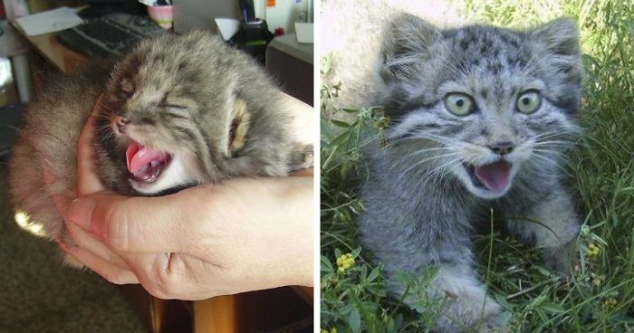 Farmer Surprised After The Kittens He Found Turned Out To Be Something Else