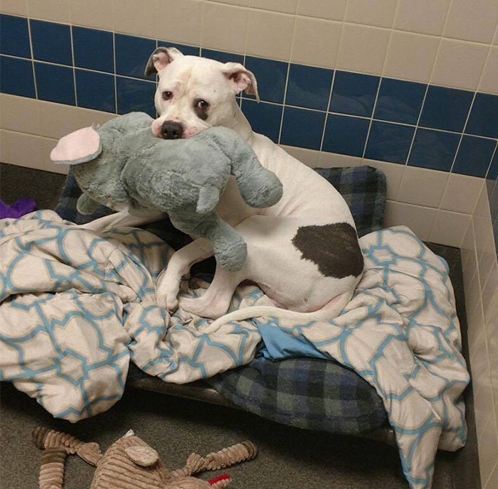 Sad Shelter Dog Whose Only Friend Was This Elephant Toy Learns That He And His Toy Are Getting New Home