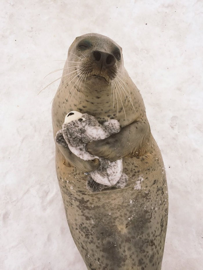 seal-cuddles-plush-toy-1
