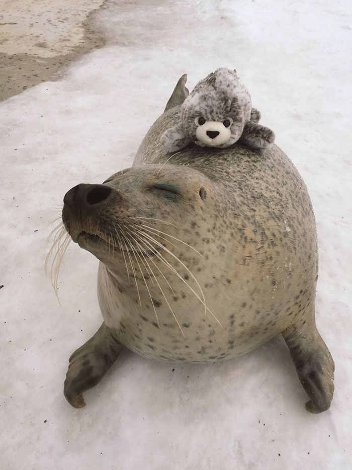 seal-cuddles-plush-toy-2