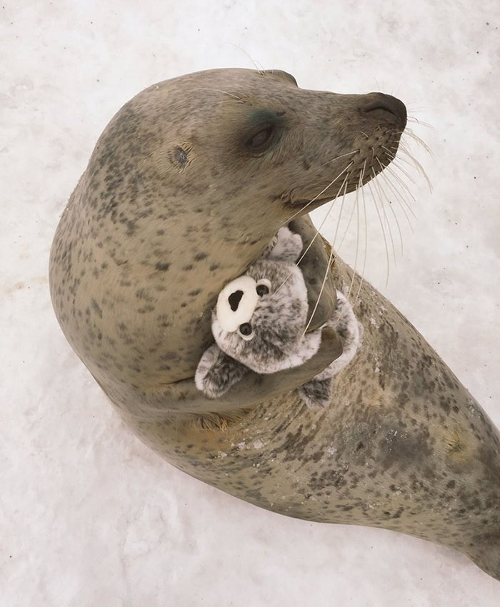 seal-cuddles-plush-toy-3