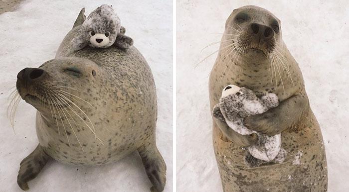 Esta foca encontró una versión suya de juguete y no deja de abrazarla