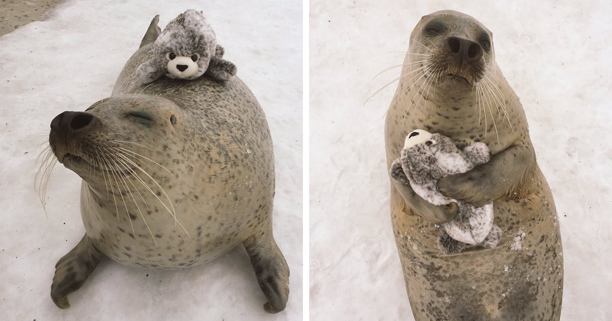 Toys For Seals : Seal finds toy version of itself can t stop hugging it