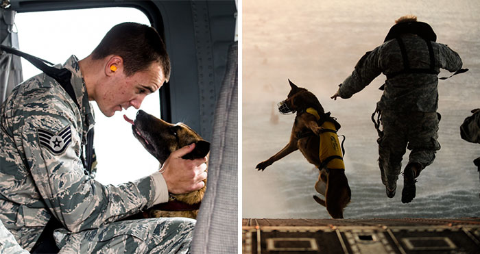 10+ Powerful Photos Of Service Dogs That Capture Their Incredible Loyalty