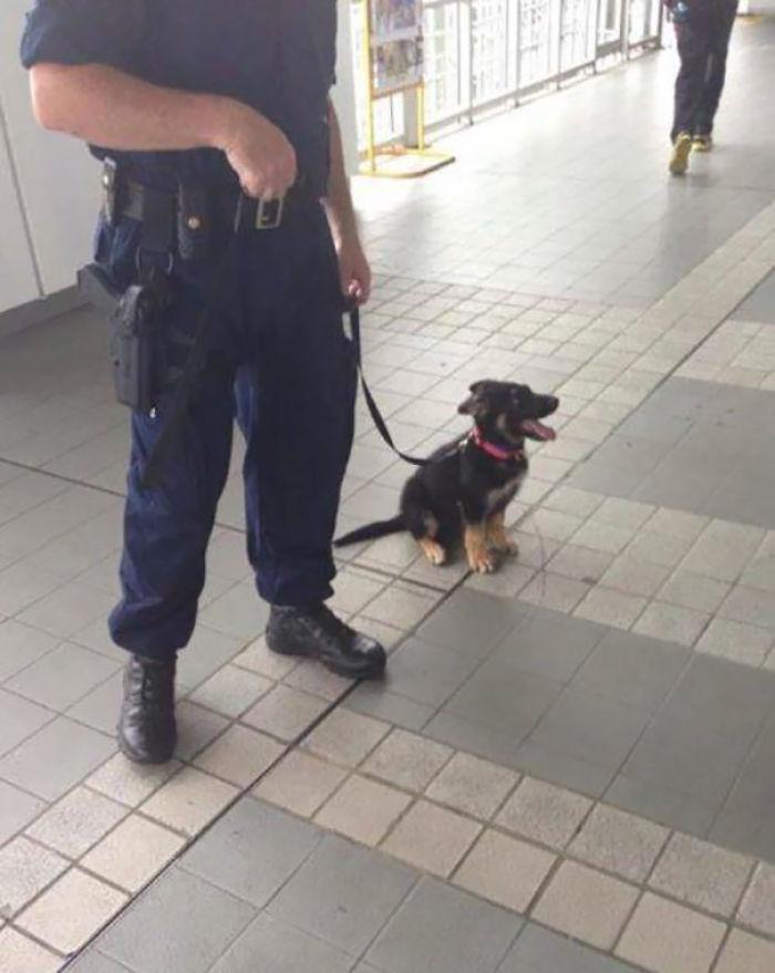 Algún día sere un perro policía grandote