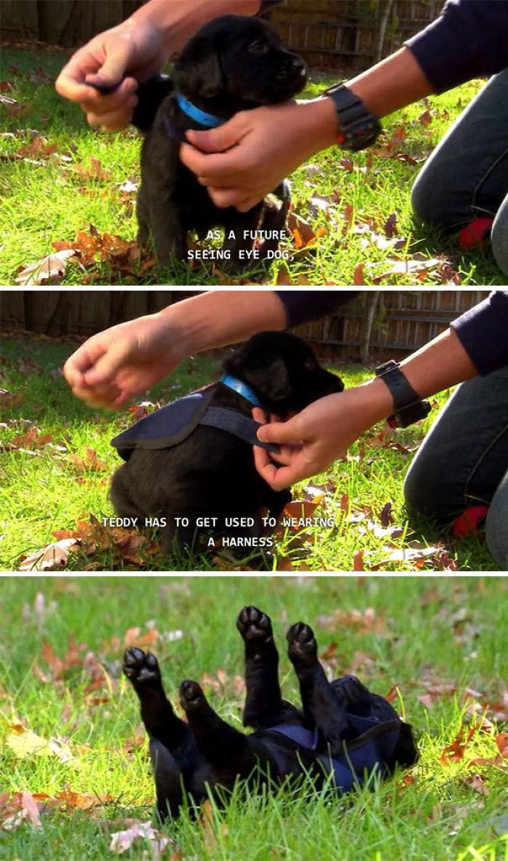 Futuro perro guía
