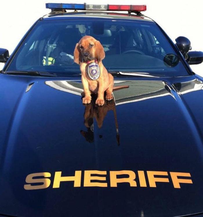 El nuevo sheriff