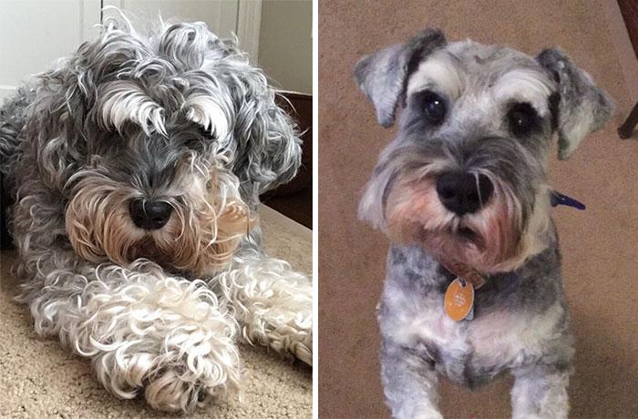 Everyone Look At My Dog's Beautiful Haircut