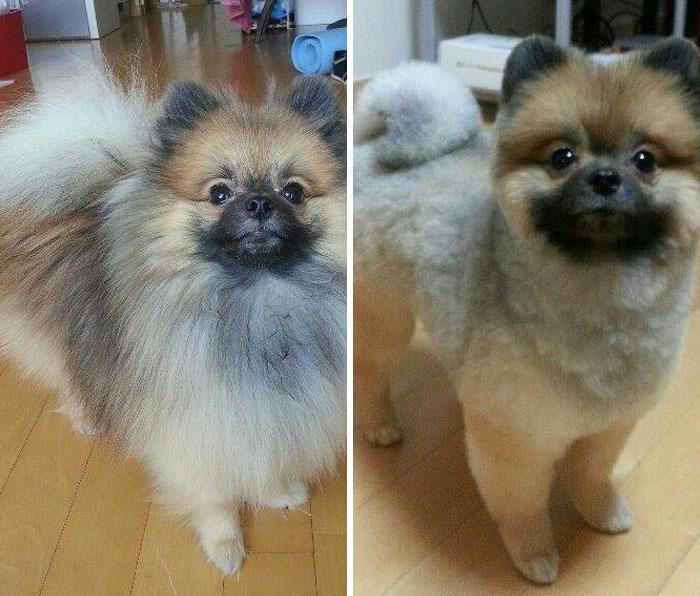 15 Забавни Снимки На Подстригани Кучета Преди И След 13
