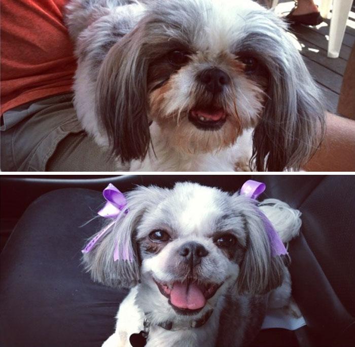 15 Забавни Снимки На Подстригани Кучета Преди И След 21