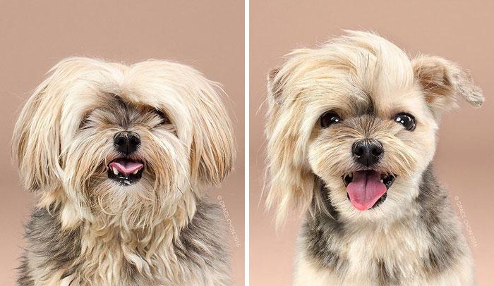 15 Забавни Снимки На Подстригани Кучета Преди И След 10