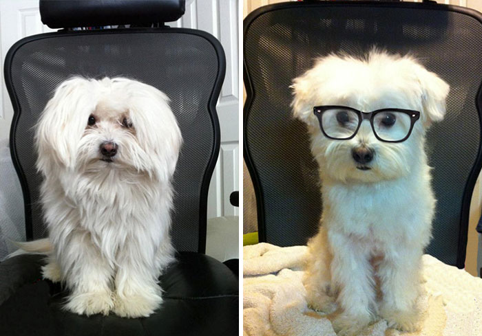 My Friend Trimmed His Dog's Hair Today