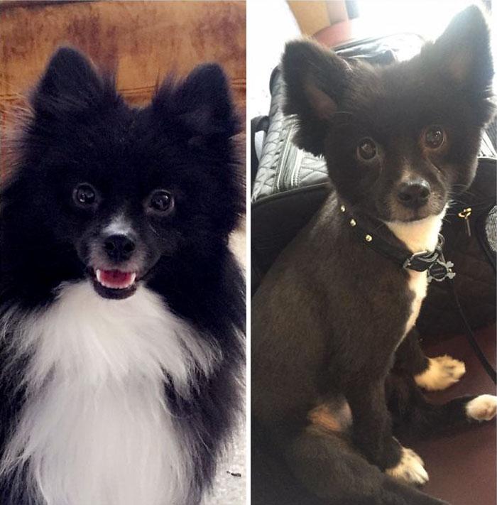 15 Забавни Снимки На Подстригани Кучета Преди И След 17