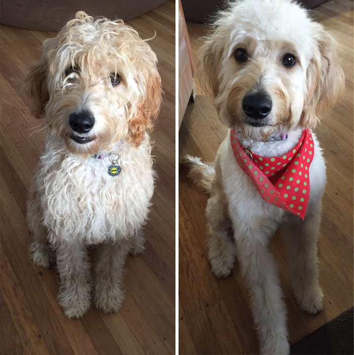 Dogs Before After Grooming Clicker Training Online