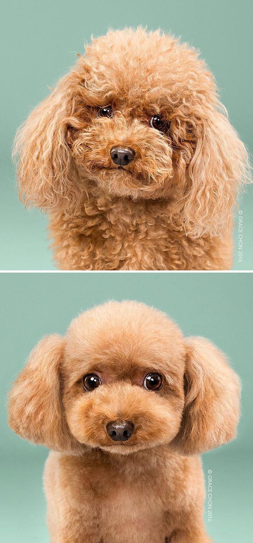 15 Забавни Снимки На Подстригани Кучета Преди И След 8