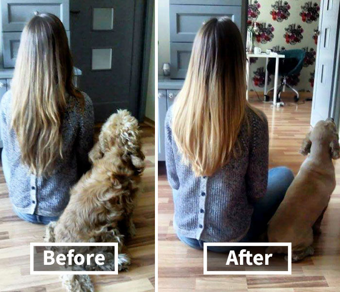Share Pictures Of Your Dogs Before And After Their Haircuts