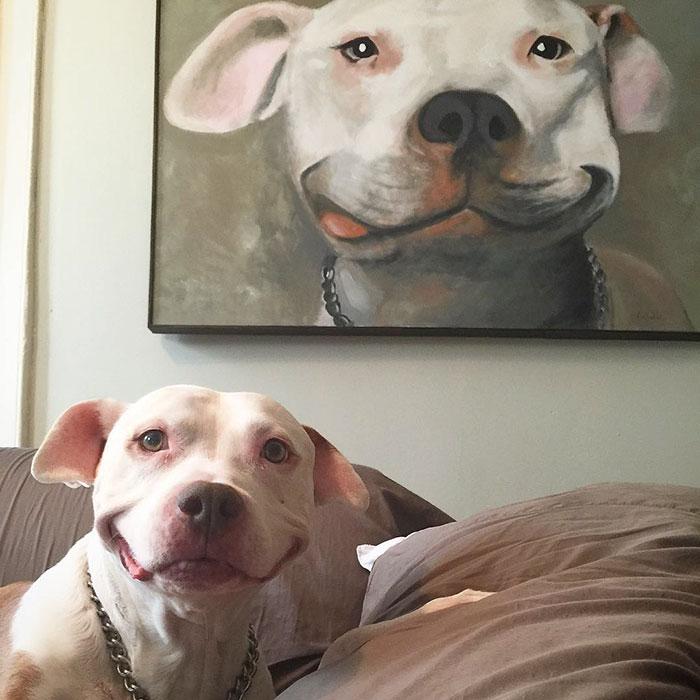 Smiling Pittie