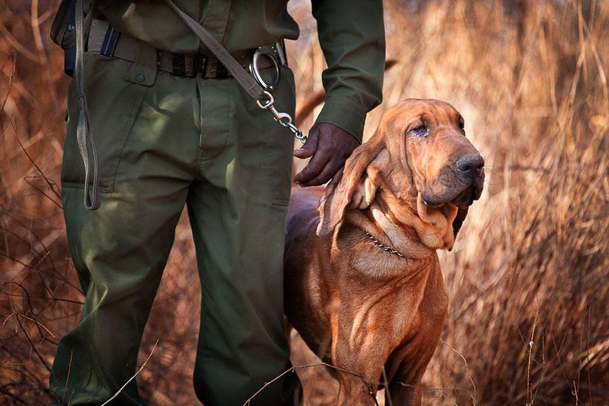 Big Life Foundation Dog Security Team Bloodhound Bone, Sustainable Travel Finalist