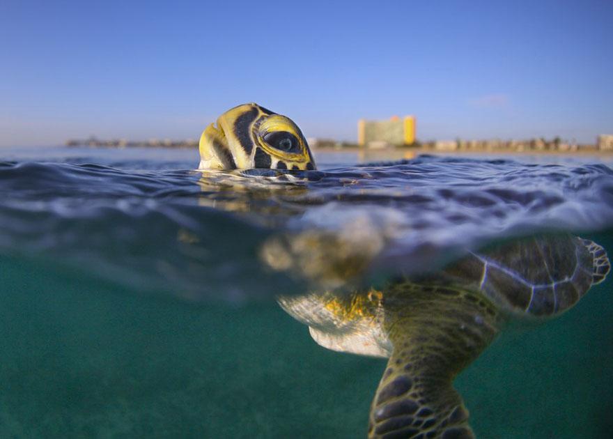 Sustainable Future, Sustainable Travel Finalist