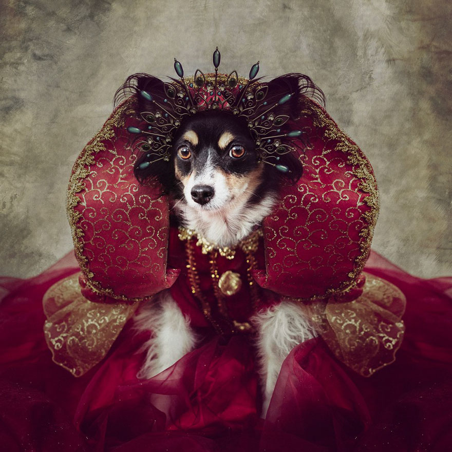 Shelter Pets Project - Peggy Sue, Altered Images Finalist