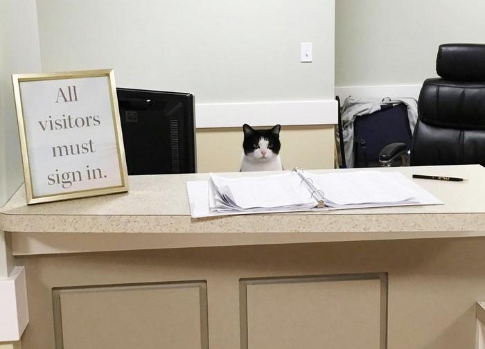 stary-cat-works-nursing-home-oreo-3
