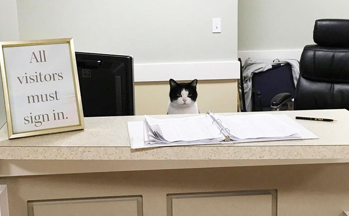 This Stray Cat Snuck Into A Nursing Home, And Got A Job