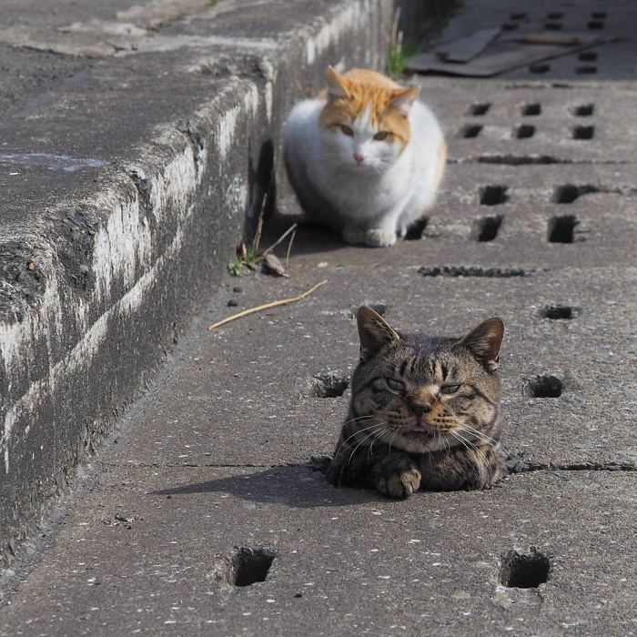 Windows Cat And Mouse Game