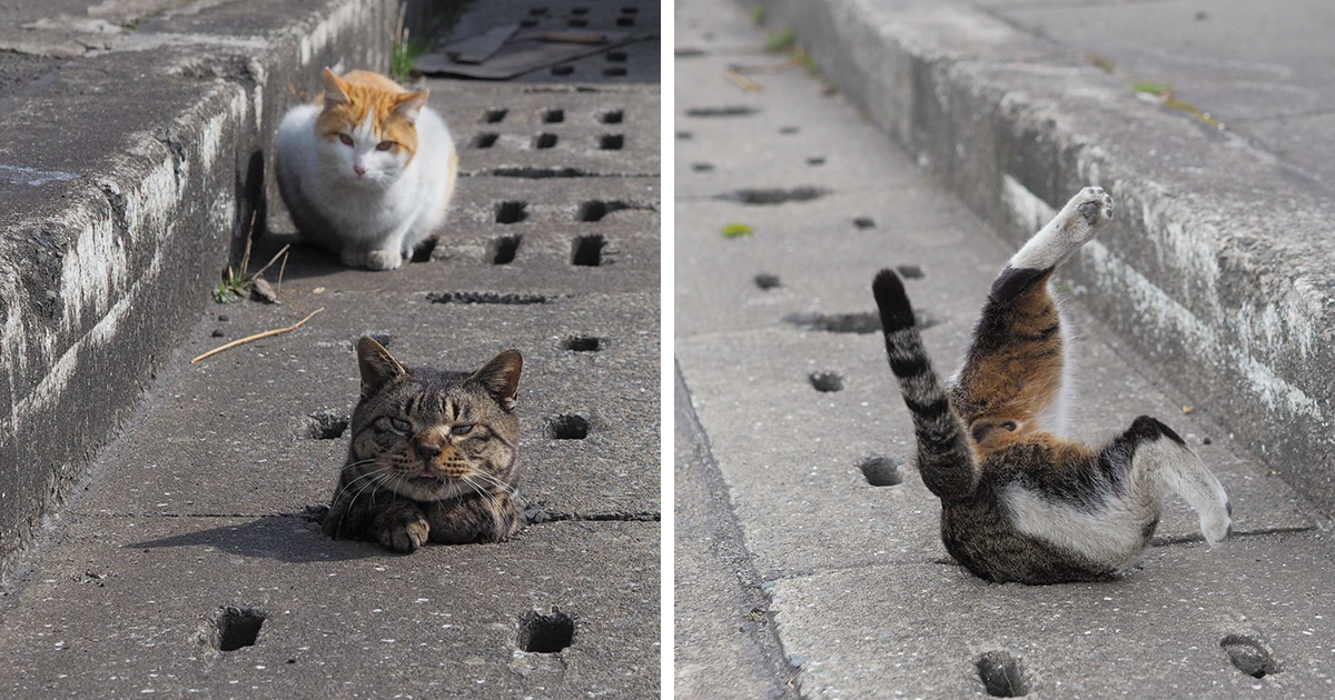 Stray Cats Find Drain Pipe Holes And Now They Are Having