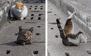 Stray Cats Find Drain Pipe Holes And Now They Are Having The Time Of Their Life