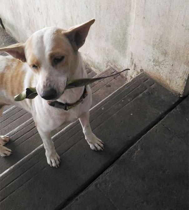stray-dog-brings-gift-feeding-woman-thailand-3